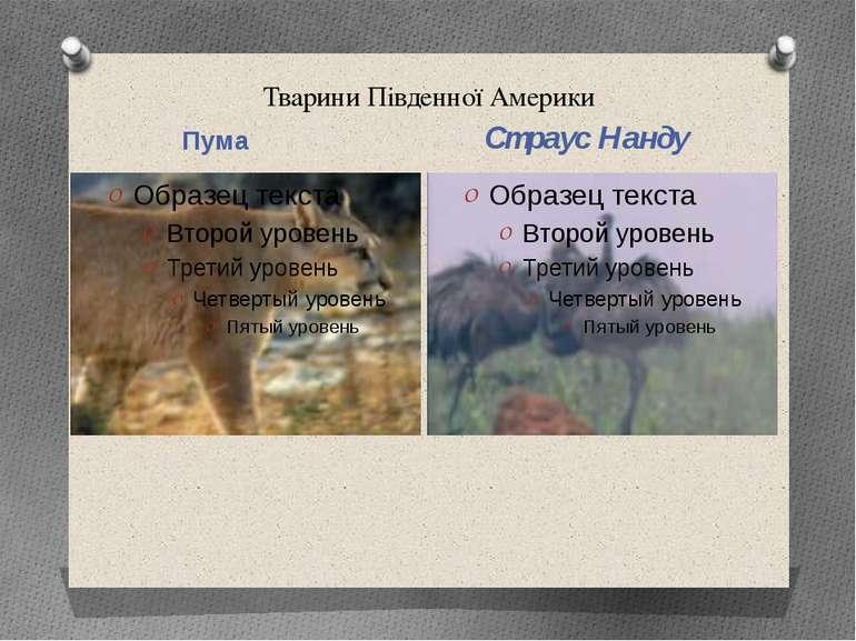 Тварини Південної Америки Пума Страус Нанду