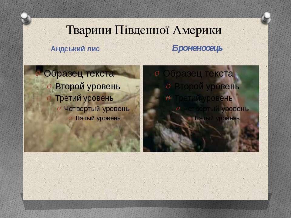 Тварини Південної Америки Андський лис Броненосець