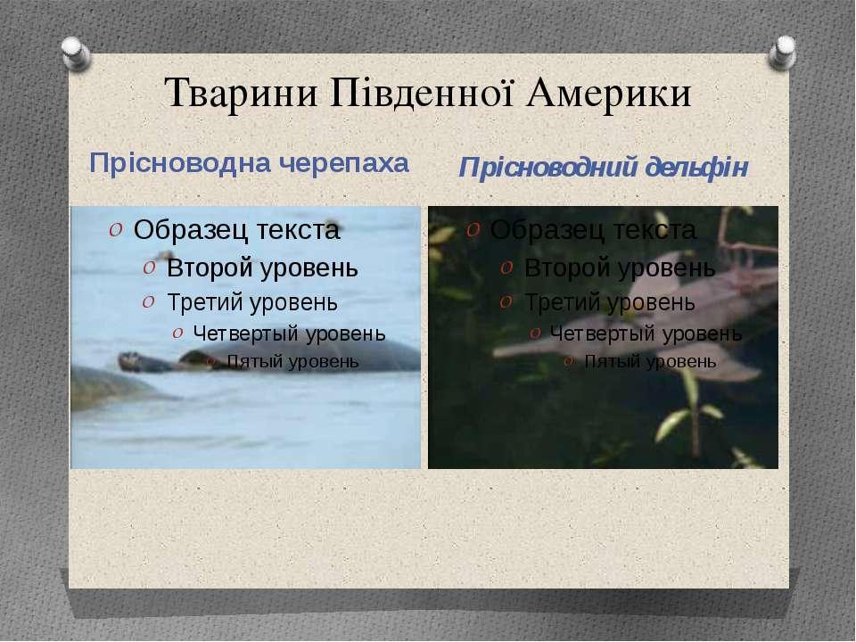 Тварини Південної Америки Прісноводна черепаха Прісноводний дельфін