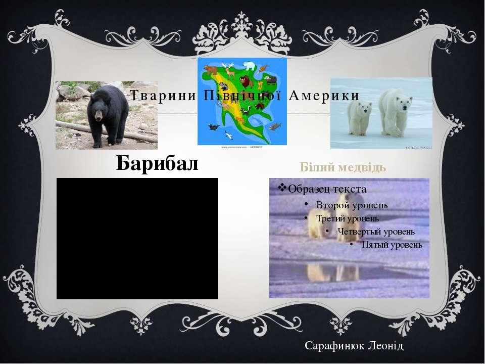 Тварини Північної Америки Барибал Білий медвідь Сарафинюк Леонід