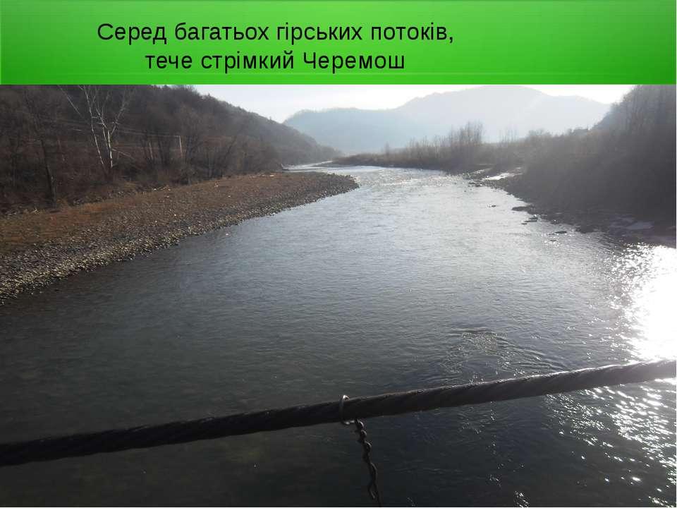 Серед багатьох гірських потоків, тече стрімкий Черемош