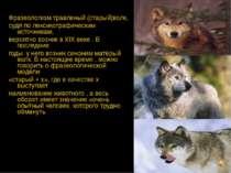 Фразеологизм травленый (старый)волк, судя по лексикографическим источникам, в...