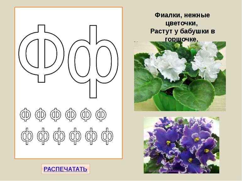 РАСПЕЧАТАТЬ Фиалки, нежные цветочки, Растут у бабушки в горшочке.