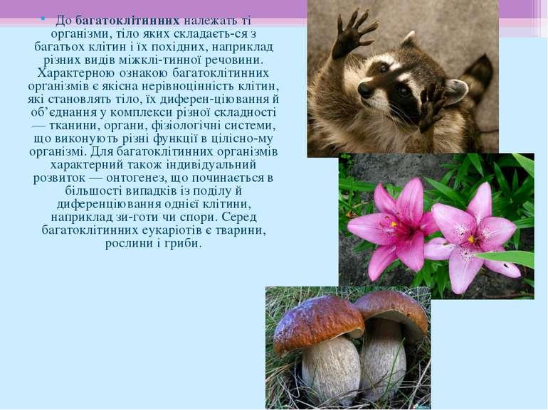 До багатоклітинних належать ті організми, тіло яких складаєть ся з багатьох к...