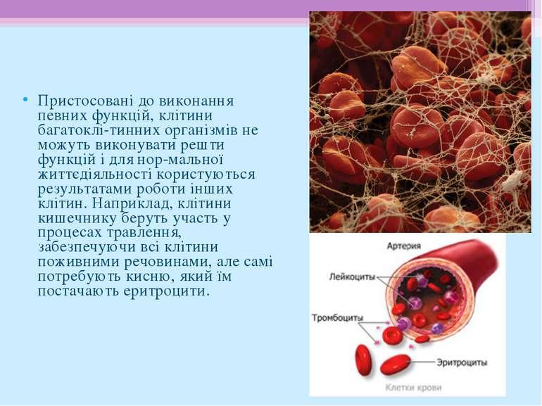 Пристосовані до виконання певних функцій, клітини багатоклі тинних організмів...