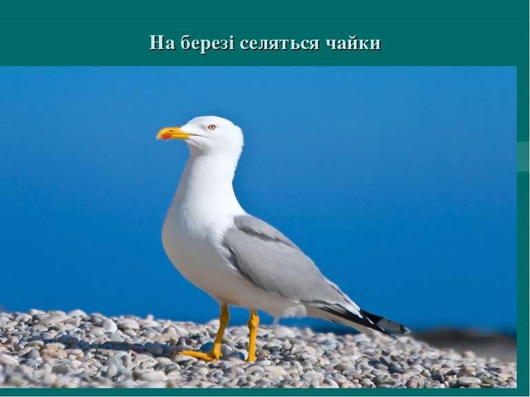 На березі селяться чайки