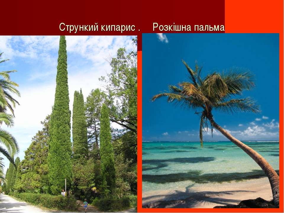 Стрункий кипарис . Розкішна пальма