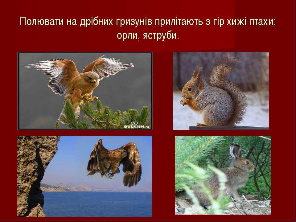 Полювати на дрібних гризунів прилітають з гір хижі птахи: орли, яструби.