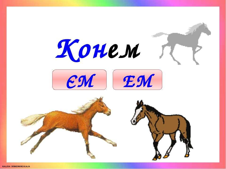 Кон ем ЕМ ЄМ
