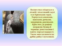 Волове очко гніздиться в лісовій і лісостеповій смузі та в Кримських горах. Х...