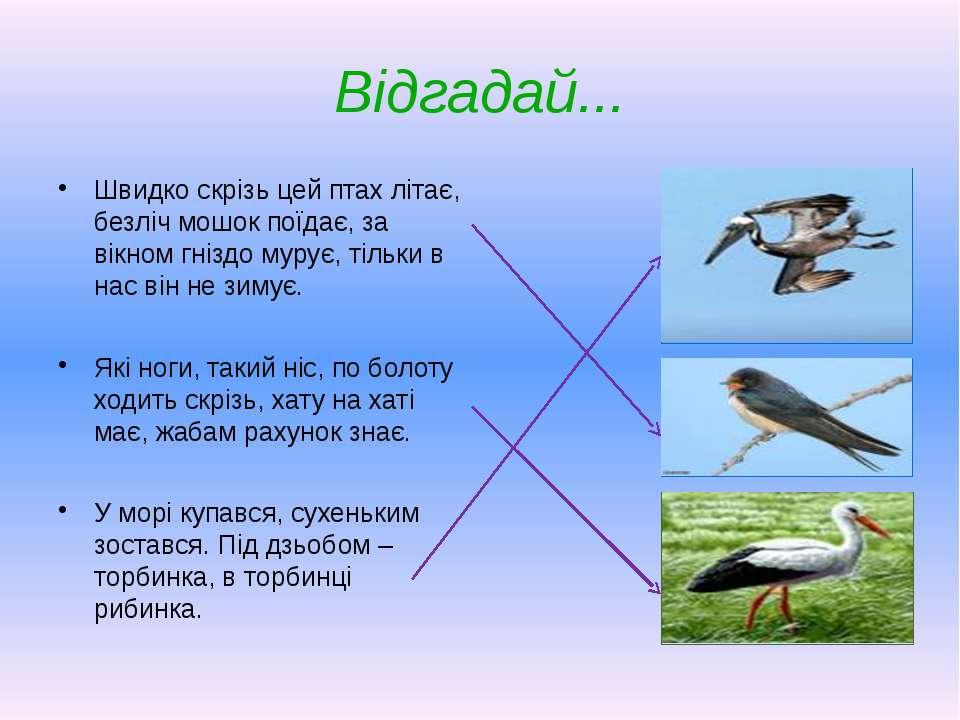 Відгадай... Швидко скрізь цей птах літає, безліч мошок поїдає, за вікном гніз...