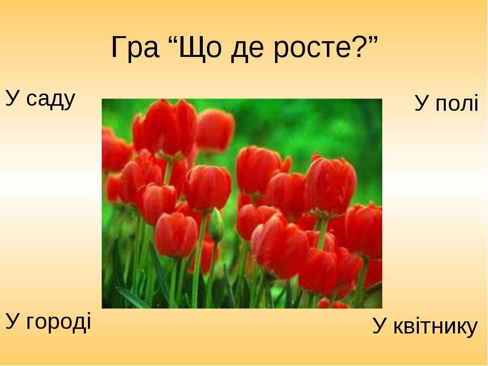 """Гра """"Що де росте?"""" У городі У саду У квітнику У полі"""
