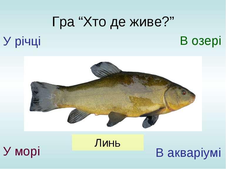 """Гра """"Хто де живе?"""" У річці У морі В озері В акваріумі Линь"""
