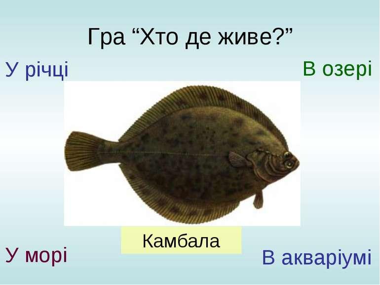 """Гра """"Хто де живе?"""" У річці У морі В озері В акваріумі Камбала"""