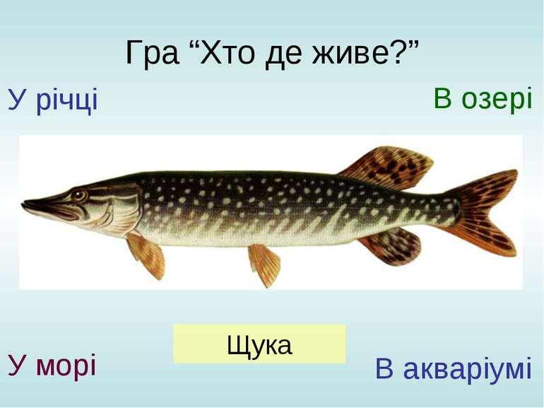 """Гра """"Хто де живе?"""" У річці У морі В озері В акваріумі Щука"""