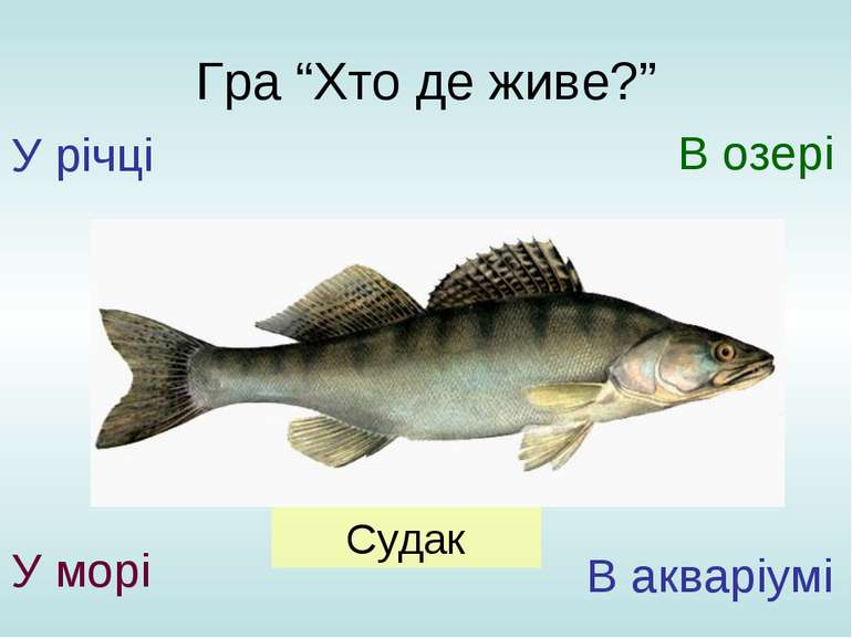 """Гра """"Хто де живе?"""" У річці У морі В озері В акваріумі Судак"""
