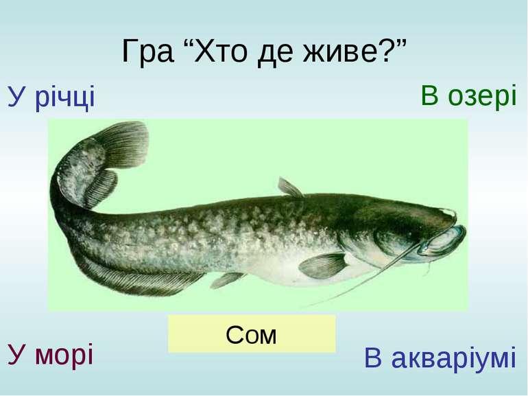 """Гра """"Хто де живе?"""" У річці У морі В озері В акваріумі Сом"""