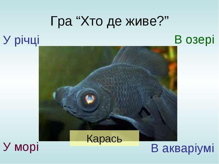 """Гра """"Хто де живе?"""" У річці У морі В озері В акваріумі Карась"""