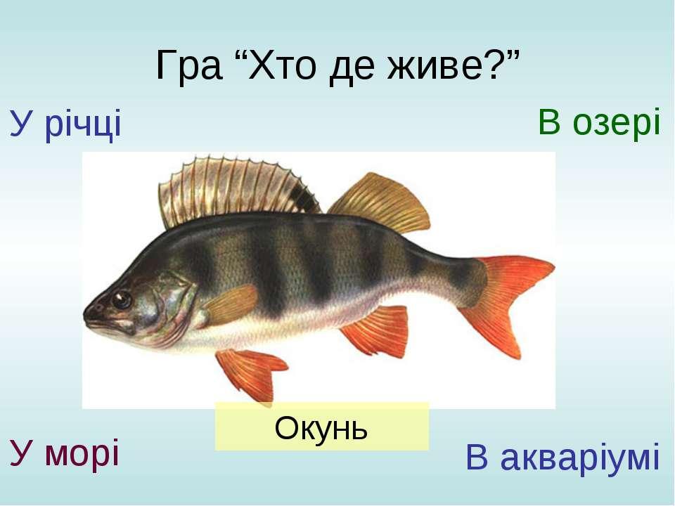 """Гра """"Хто де живе?"""" У річці У морі В озері В акваріумі Окунь"""