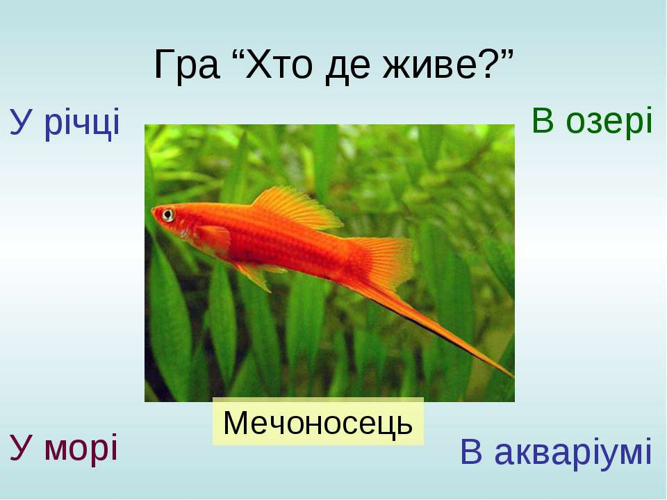 """Гра """"Хто де живе?"""" У річці У морі В озері В акваріумі Мечоносець"""