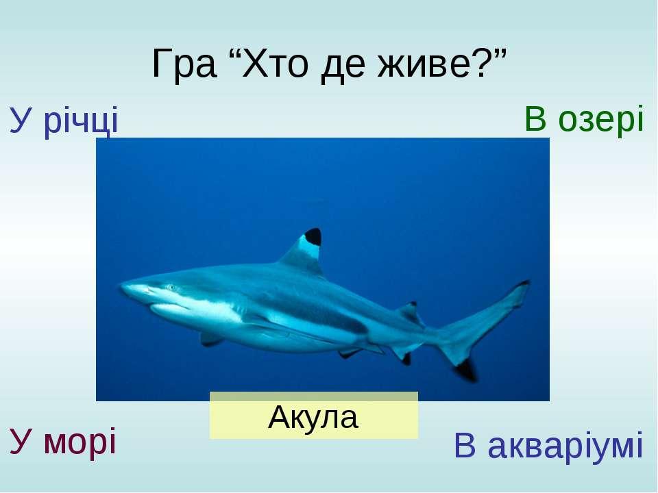 """Гра """"Хто де живе?"""" У річці У морі В озері В акваріумі Акула"""