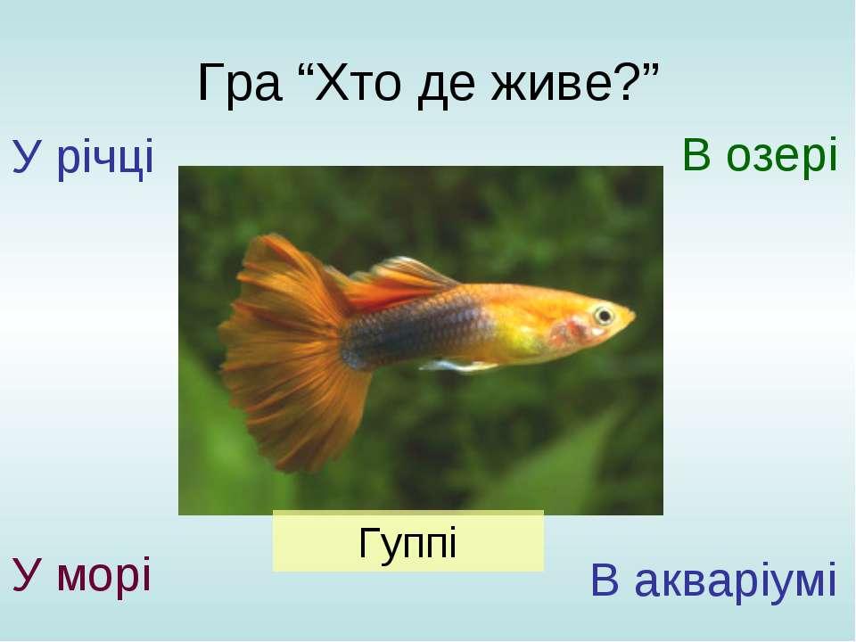 """Гра """"Хто де живе?"""" У річці У морі В озері В акваріумі Гуппі"""