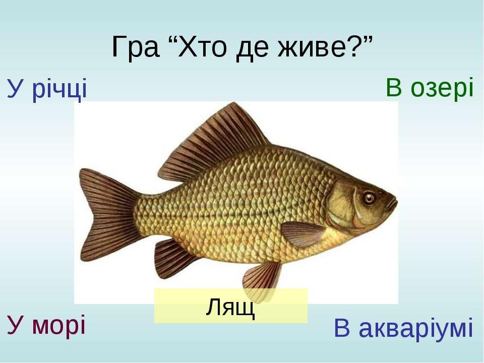 """Гра """"Хто де живе?"""" У річці У морі В озері В акваріумі Лящ"""