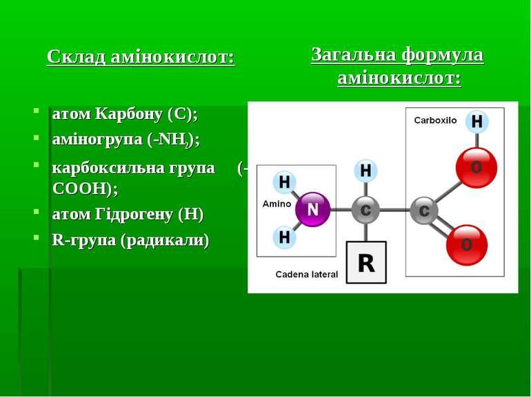 Склад амінокислот: атом Карбону (C); аміногрупа (-NH2); карбоксильна група (-...