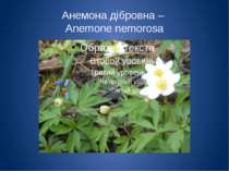 Анемона дібровна – Anemone nemorosa