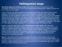 Найвідоміші види Звичайнийпідсніжник (Galanthus nivalis).Всім знайома росли...