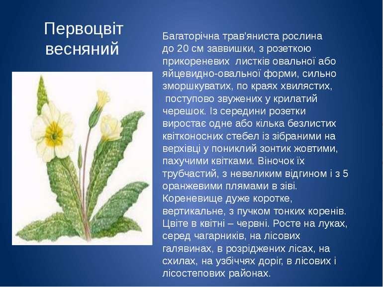 Первоцвіт весняний Багаторічна трав'яниста рослина до20 смзаввишки, з розе...