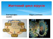 Життєвий цикл вірусів Бактеріофаг: Вірус у клітині-хазяїні