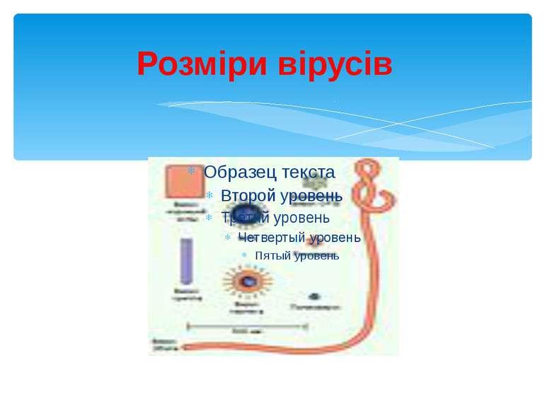 Розміри вірусів