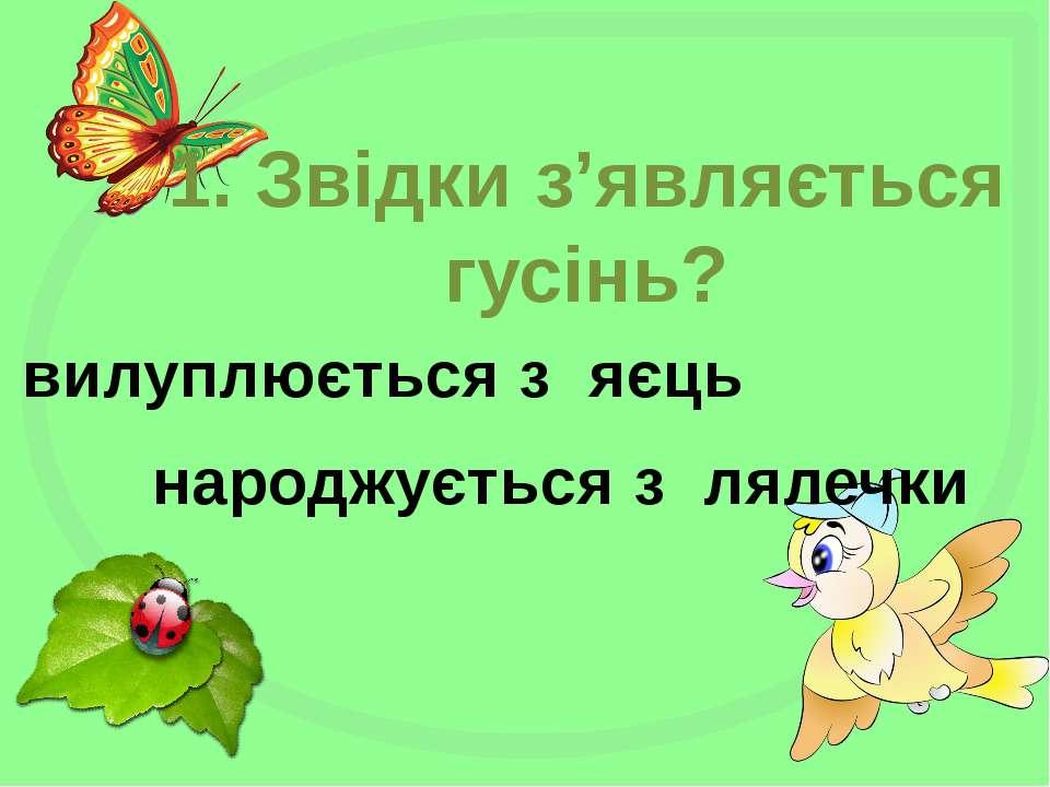 1. Звідки з'являється гусінь? вилуплюється з яєць народжується з лялечки