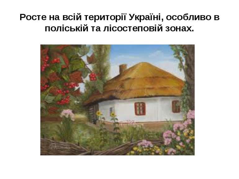 Росте на всій території Україні, особливо в поліській та лісостеповій зонах.