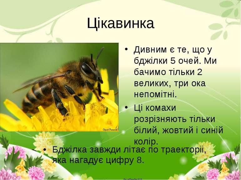 Цікавинка Дивним є те, що у бджілки 5 очей. Ми бачимо тільки 2 великих, три о...