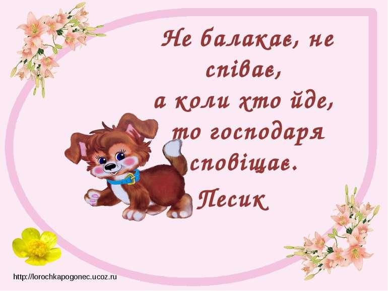 Не балакає, не співає, а коли хто йде, то господаря сповіщає. Песик http://l...