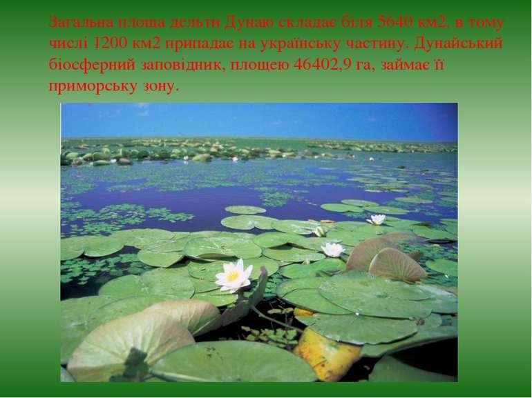 Загальна площа дельти Дунаю складає біля 5640 км2, в тому числі 1200 км2 прип...