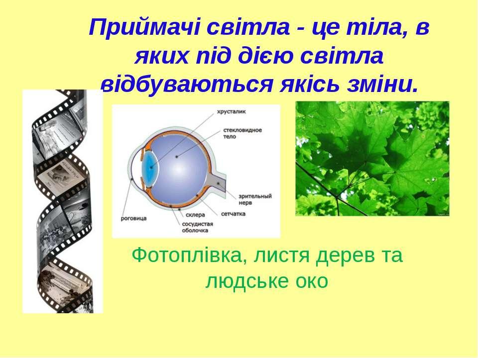 Приймачі світла - це тіла, в яких під дією світла відбуваються якісь зміни. Ф...
