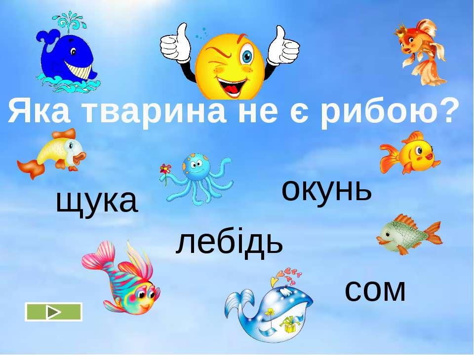 щука окунь сом лебідь Яка тварина не є рибою?