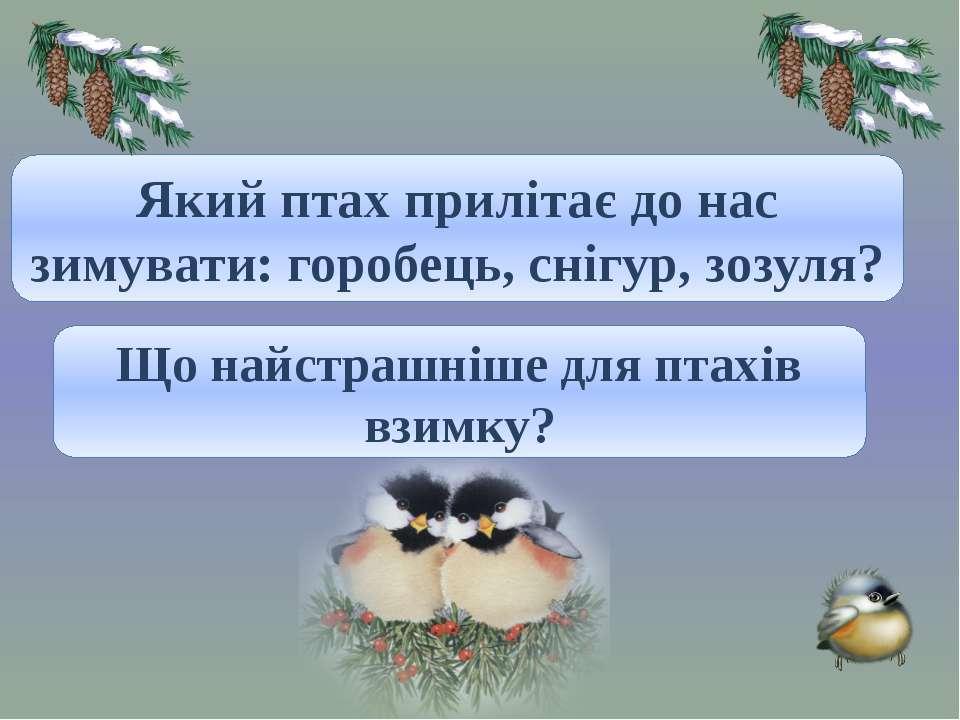 Снігур. Який птах прилітає до нас зимувати: горобець, снігур, зозуля? Холод і...