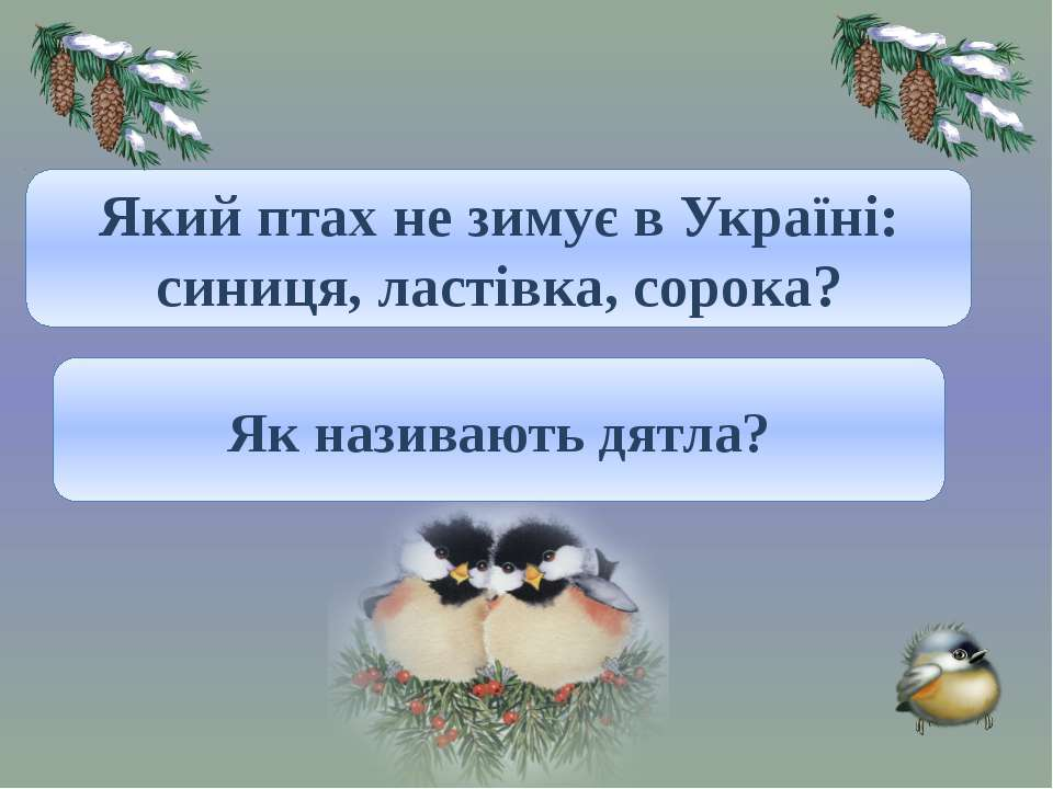 Ластівка. Який птах не зимує в Україні: синиця, ластівка, сорока? «Санітар лі...