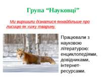 """Група """"Науковці"""" Ми вирішили дізнатися якнайбільше про лисицю як хижу тварину..."""