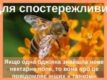 Якщо одна бджілка знайшла нове нектарне поле, то вона про це повідомляє інших...