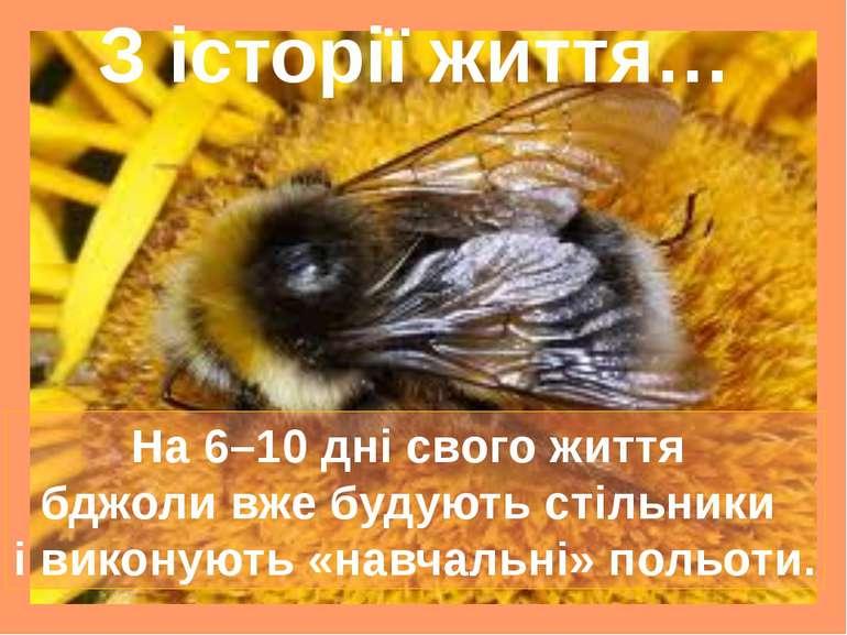 З історії життя… На 6–10 дні свого життя бджоли вже будують стільники і викон...