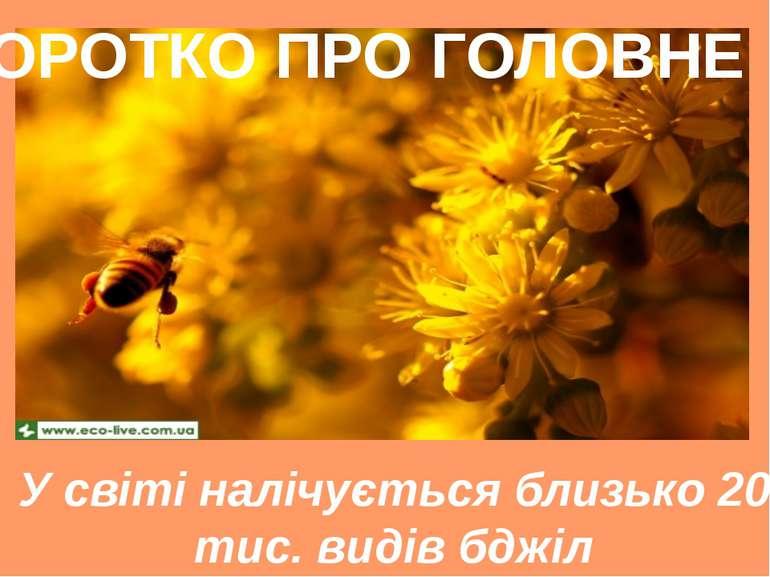 У світі налічується близько 20 тис. видів бджіл КОРОТКО ПРО ГОЛОВНЕ