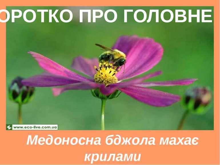 Медоносна бджола махає крилами зі швидкістю 11400 разів на хвилину КОРОТКО ПР...