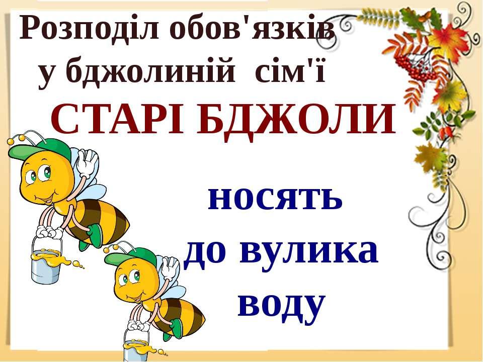 Розподіл обов'язків у бджолиній сім'ї СТАРІ БДЖОЛИ носять до вулика воду