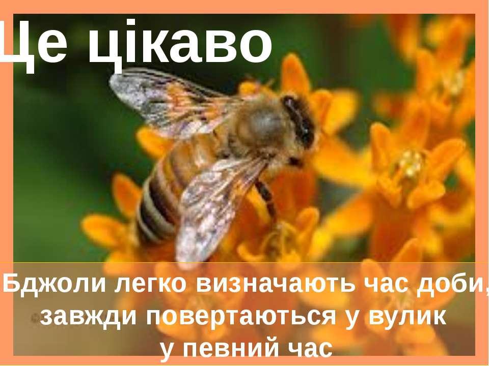 Бджоли легко визначають час доби, завжди повертаються у вулик у певний час Це...