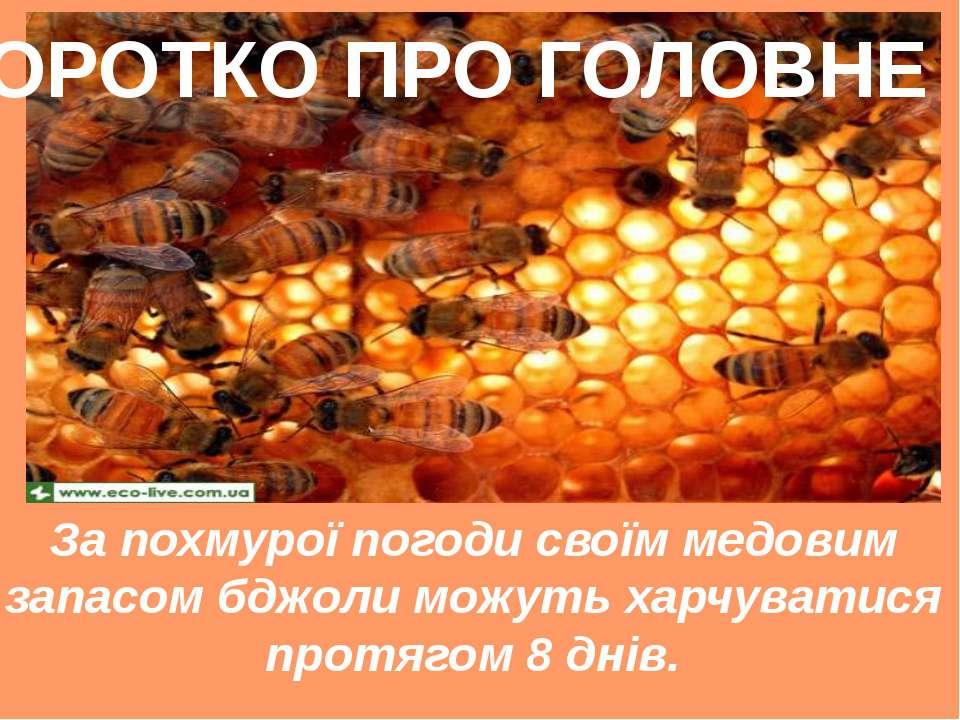 За похмурої погоди своїм медовим запасом бджоли можуть харчуватися протягом 8...